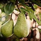 Pear by Kye Vincent