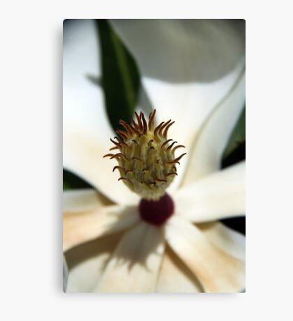 Alien (Magnolia Grandiflora) Canvas Print