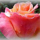 Lolita - Rose half open by EdsMum