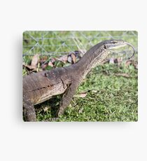 Dragon with forked tongue. Metal Print