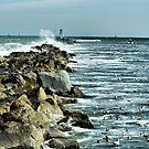 Gulls Near The Rocks by Deborah  Benoit