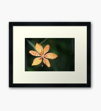 Dunno Flower Framed Print