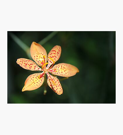 Dunno Flower Photographic Print