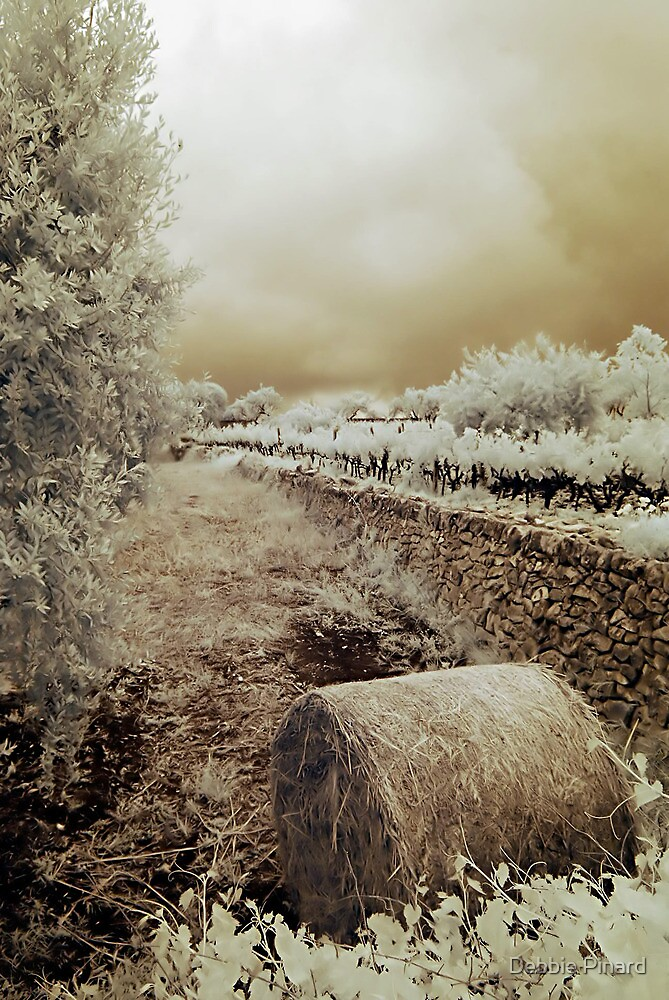 Hay, Olives and Grapes - Puglia Italy by Debbie Pinard