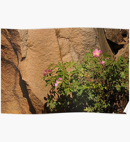 Rocks and Roses Poster