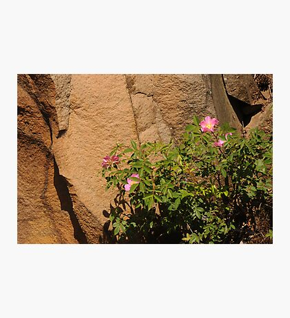Rocks and Roses Photographic Print