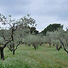 French Olive Grove by Hilda Rytteke