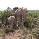 elephants feeding by shaft77