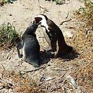 penguin feeding by shaft77