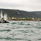 whale on the side by shaft77