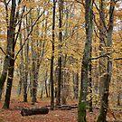 Autumnal Shades by Hilda Rytteke