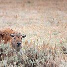 Sad Calf In The Freezing Rain by A.M. Ruttle