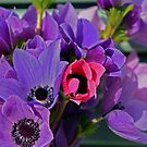 flowers by alikys