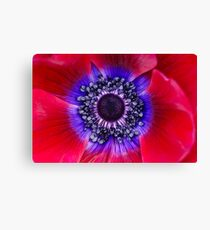 Red and Blue Poppy Canvas Print