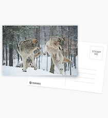 Dances With Wolves Postcards
