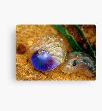 Purple sea snail + blue-bottle Canvas Print