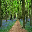 Bluebell wood by Anthony Thomas