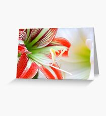 red and white lilly flowers Greeting Card