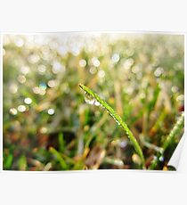 Dewdrop Morning Poster