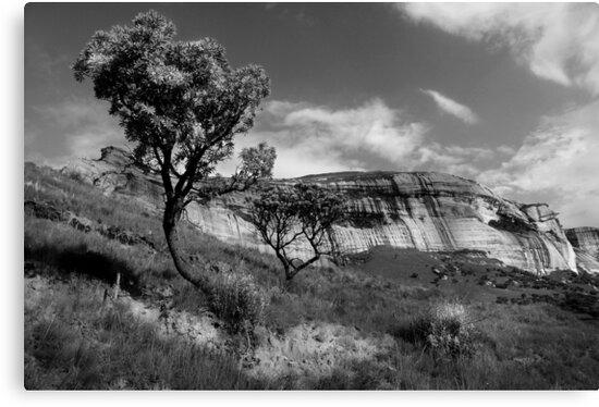 Sandstone Cliffs, Golden Gate, South Africa by Sharon Bishop