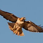 021511 Red Tailed Hawk by Marvin Collins