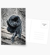 Marmoset Postcards