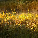 GRASSES by linaji-cards