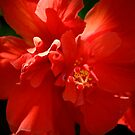 For the Love of Red by linaji-cards