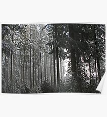 Snowing on Moon Falls Trail  Poster