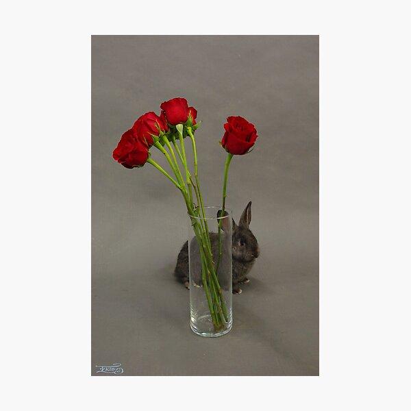 Hoppy Valentine's Day 2 Photographic Print