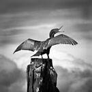Sea Bird by Christine Wilson