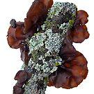 Like'n the Lichens by Carla Wick/Jandelle Petters