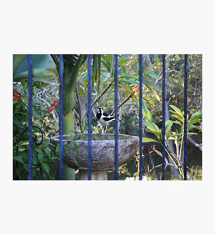 Peewee Through The Pool Fence Photographic Print