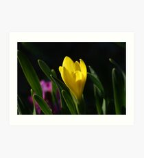shy spring Art Print