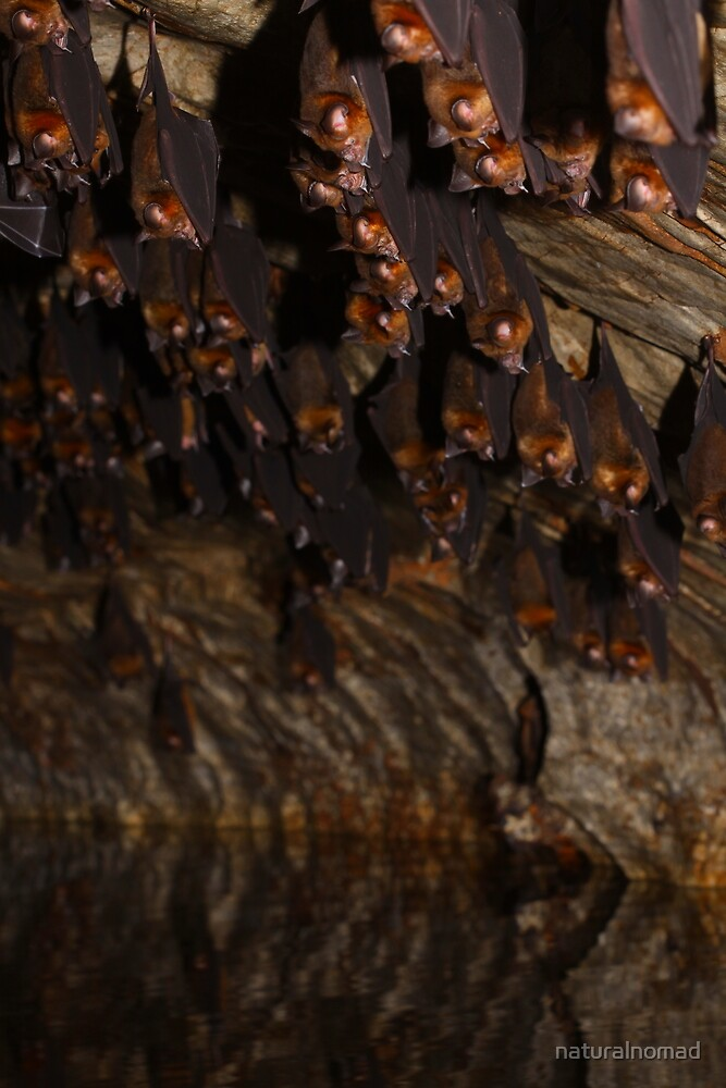 The Bat Cave by naturalnomad