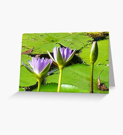 Water Lillies ... Greeting Card