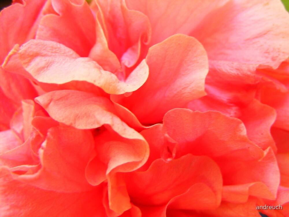 La Vie en Rose, Floral time series by andreuch