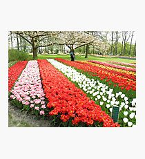 Netherlands Flowers Photographic Print