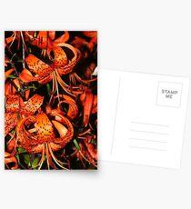 Tiger Lily (Lilium lancifolium) Postcards