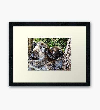 Holdin on to mum - Victoria Framed Print