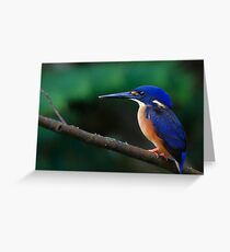 Azure Kingfisher Greeting Card