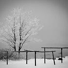 Winter magic by Marek Nõlvak
