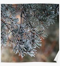 Frosted pinetrees. II Poster