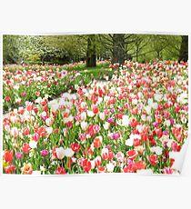 Netherlands Flowers Poster