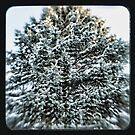 coniferous by Jason Platt