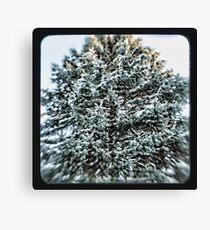 coniferous Canvas Print