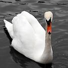 Swan by Dean Messenger