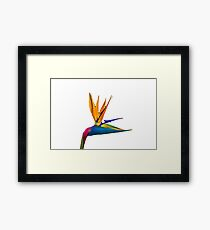 Bird of Paradise Flower (colour paint) Framed Print