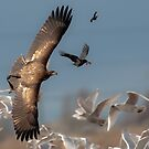 The Chase by David Friederich