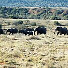 elephant family by shaft77